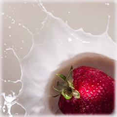 Strawberry & Cream (Explored) (lclower19) Tags: strawberry highspeed cream splash closeup macro red white 2852 522016 square explored