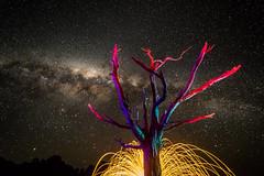 DJM_1794 (Daniel J Murphy) Tags: pentax k1 australia coffsharbour night astrophotography lightpainting longexposure milkyway