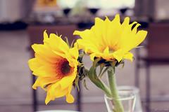 Fernanda e Vinicius - Flor (lcamargo.dm) Tags: casamento marriage love photo fotografia design flor flower wedding