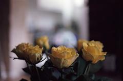 Nikkormat FT2 Kodak Portra 400 (jeanchristophe.jacques) Tags: flowers 50mm nikon kodak 400 portra nikkormat