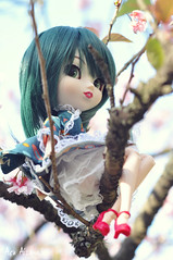 Alana (Au Aizawa) Tags: pullip haute ny newyork japanese fashion doll sakura matsuri blossom waloli sweetlolita