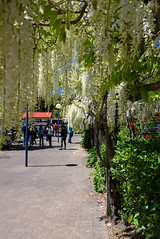 Waiting for Friends (Jocey K) Tags: akaroa newzealand bankspeninsula southisland buildings lamps people flowers trees roses wisteria