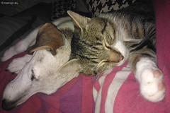Bastian in his former home (2014) (Finn Frode (DK)) Tags: dog pet cats max animal cat indoor bailey mixedbreed adoptee oldhome bastian domesticshorthair