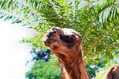Zoo Johor (phalinn) Tags: zoo johor bahru malaysia asia skudai jdt tmj 1mdb animal mammals reptile lion tiger tapir camel monkey deer hippopotamus otter crocodile buaya singa harimau family people outdoor kid travel holiday tour wanderlust relax explore jalan cuti canon eos 7d