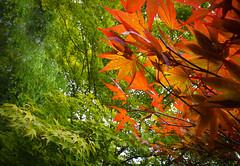 Hasselt - 04 aout 2016- 2 (Thierry Valdin) Tags: jardinjaponais japon hasselt parc belgique tuin japanesetuin belge valndereen flandre