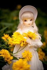 (koroa) Tags: bluefairy bf sd amy bjd doll