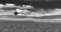 One Tree Hill Mono (jactoll) Tags: warwickshire summer mono monochrome black white bw landscape lonetree tree light sony a6000 jactoll