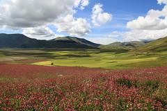 Sibillini, nuvole e fiori (Dancing Flowers by Gio') Tags: gio sibillini piangrande umbria castelluccio marche italia italie italien italy appennini