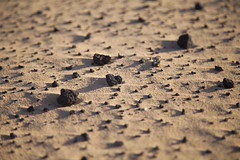 Piedrecillas movidas por el viento. Parque Natural de Corralejo, Fuerteventura. (www.rojoverdeyazul.es) Tags: fuerteventura islas canarias canary islands espaa spain autor lvaro bueno piedras guijarros arena stones pebbles sand