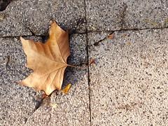 new dawn, new day, new life. (Lívia.Monteiro) Tags: chile autumn santiago cerrodesantalucia