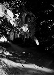 Hamburg - Hoisbttel (chicitoloco) Tags: trees house arboles shadows flat hamburg wald talltrees flathouse chaussee bergstedt hoisbttel hamburgerstrase waldrfer bergstedter lottbekerweg
