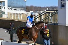 "2015-02-13 (22) r2 Roimes Chirinos on #6 Secret Garden (JLeeFleenor) Tags: photos photography md laurelpark jockey جُوكِي ""赛马骑师"" jinete ""競馬騎手"" dżokej jocheu คนขี่ม้าแข่ง jóquei žokej kilparatsastaja rennreiter fantino ""경마 기수"" жокей jokey người horses thoroughbreds equine equestrian cheval cavalo cavallo cavall caballo pferd paard perd hevonen hest hestur cal kon konj beygir capall ceffyl cuddy yarraman faras alogo soos kuda uma pfeerd koin حصان кон 马 häst άλογο סוס घोड़ा 馬 koń лошадь maryland"