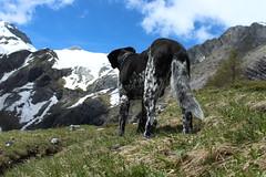Mastik (bulbocode909) Tags: nature vert bleu neige nuages chiens montagnes