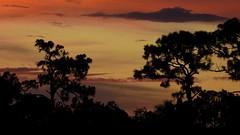 Sunset July 16th 2016 (Jim Mullhaupt) Tags: sunset sundown dusk sun evening endofday sky clouds color red gold orange pink yellow blue tree palm silhouette weather tropical exotic wallpaper landscape nikon coolpix p900 bradenton florida jimmullhaupt cloudsstormssunsetssunrises photo flickr geographic picture pictures camera snapshot photography nikoncoolpixp900 nikonp900 coolpixp900