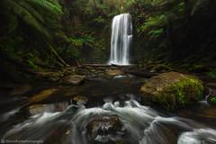 Beauchamp Falls, Great Otway NP, VIC (Jarrod Hyde Photography) Tags: longexposure green water landscape waterfall rainforest australia victoria greatoceanroad australiangeographic canonphotographers