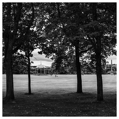 199/366 Sunday Morning in Duthie Park (Sarah*Rose) Tags: aberdeen duthie park trees bandstand walk