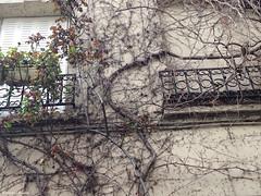 liere grimpe (alexandrarougeron) Tags: faade volet immeuble habitat vgtation france paris