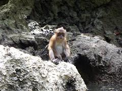 Koh Panak (Sea Kayaking), Thailand (Jan-2016) 21-099 (MistyTree Adventures) Tags: kohpanak kohpanakisland aophangnganationalpark seasia thailand phuket panasoniclumix outdoor phangngabay limestone animal monkey macaque macaquemonkey