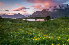 Lofoten (andreassofus) Tags: travel sunset mountains color nature grass norway landscape colorful lofoten midnightsun travelphotography grandlandscape