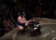 Sumo winner receiving his prize in the ryogoku kokugikan sumo arena, Kanto region, Tokyo, Japan (Eric Lafforgue) Tags: people male men sport japan horizontal asian japanese tokyo big fight referee asia fighter martial wrestling fat traditional champion culture competition clash ring indoors tournament ritual leisure sumo inside strength athlete wrestlers 2people twopeople adultsonly cultural overweight ryogoku competitors kantoregion colourpicture 2029years japan161085