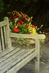 weathered bench and flowers (heyjudephoto) Tags: wood flowers summer nature garden bench moss worn weathered arrangement
