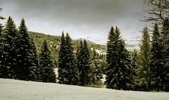 Combloux, lomography, 20 (Patrick.Raymond (2M views)) Tags: alpes haute savoie combloux montblanc lomography xpro argentique nikon bois arbre foret neige hivers