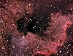 Cygnus Wall - NGC 7000 (Manifest Stephanie) Tags: ngc7000 ngc 7000 cygnus wall north america nebula astrophotography tele vue televue qsi zwo asi178mc 6120 astrometrydotnet:id=nova1651242 astrometrydotnet:status=solved