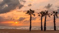 Playa San Juan Alicante (tomicio) Tags: nwn cloudsstormssunsetssunrises mediterrneo palmeras tomaspardo comunitat generalitatvalenciana alicante playsanjuan playa clouds nubes atardecer sunset sunrise amanecer sigma35mmf14 sigma35mm sigma sigmaart nikond7100 nikon greatphotographers simplysuperb