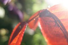 (spiritualblue) Tags: leaves macro details light