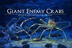 Giant Enemy Crabs (Marco Hazard) Tags: osaka aquarium giant enemy crab spidercrab meme boss genji dark souls farron