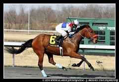 IMG_0640 (femalejockeys) Tags: femalejockeys turfway park female athletes horse racing horses thoroughbred kentucky derby