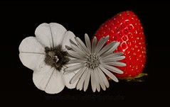 Threesome (Maxum1201) Tags: blume fruit treesome frucht frchte erdbeere colorkey