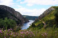 Vila Velha de Rdo | --- (Antnio Jos Rocha) Tags: portugal vilavelhaderdo portasderdo riotejo rio gua albufeira pedra natureza linhadecomboio floressilvestres formaorochosa