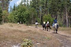 5D_IMG_6567 (Jeroen Kransen) Tags: bulgarije bulgaria    horse horseback equestrian horseriding paardrijden paardrit rodopen rhodopes