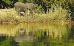 Things that want to kill you along the Zambezi River (dw*c) Tags: zambezi zambeziriver river animal animals trip travel africa nikon picmonkey