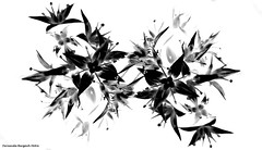 delicado black (ojoadicto) Tags: flowers flores monochrome blackandwhite blancoynegro alto contrast contrastes digitalmanipulation manipulaciondefotos artisticphotography