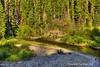 Deep Creek (jimgspokane) Tags: camping forests dahostate montanastate rivers streams creeks mountains excapture otw magrudercorridor