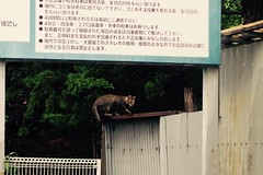 Today's Cat@2016-09-13 (masatsu) Tags: cat thebiggestgroupwithonlycats catspotting pentax mx1
