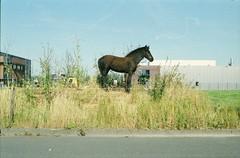 Hondsgemet, Geldermalsen, GD (Jickatrap) Tags: pentaxmz50 pentax 35mm  analog film filmphotography  fujisuperia superia200 caballo       photographersontumblr  newtopographics urbanlandscape geldermalsen