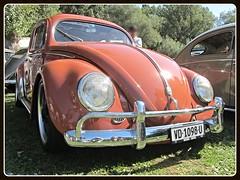 VW Beetle, 1956 (v8dub) Tags: vw beetle 1956 volkswagen fusca maggiolino kfer kever bug bubbla cox coccinelle schweiz suisse switzerland german pkw voiture car wagen worldcars auto automobile automotive aircooled old oldtimer oldcar klassik classic collector