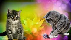 Chat-Lotus (denyselandry) Tags: fleur cat creativity chat artistic lotus