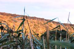 Tower Hill - Landscape (mertie.) Tags: sunset greatoceanroad nativebush warrnambool australiananimals nativeanimals towerhillreserve