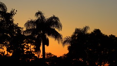 Sundown and a cloudless sky (Jim Mullhaupt) Tags: pink blue sunset red wallpaper sky orange sun color tree weather silhouette yellow clouds landscape evening nikon flickr sundown florida dusk palm exotic p900 tropical coolpix bradenton endofday mullhaupt nikoncoolpixp900 coolpixp900 nikonp900 jimmullhaupt