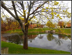Trees & Pond On Meeting House Road At Chelmsford, MA. In Springtime - Photo by STEVEN CHATEAUNEUF - May 5, 2015 (snc145) Tags: park trees water grass reflections fun photo spring pond seasons autofocus canel thisphotorocks mostbeautifulpicturembpictures flickrunitedaward stevenchateauneuf