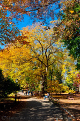 Colors on the Path (SamuelWalters74) Tags: newyorkcity autumn trees newyork unitedstates centralpark manhattan fallcolors places autumnleaves autumncolors fallfoliage centralparkinautumn