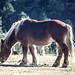25 horse mountain