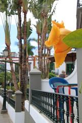 Gran Canaria: Puerto de Mogan (Kristel Van Loock) Tags: grancanaria gran canaria islascanarias puertodemogan canarischeeilanden isolecanarie thecanaryislands lescanaries