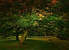 Grace (Jan 130) Tags: grace digitalpainting texture woods forest suttonpark suttoncoldfield england uk wow