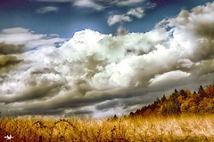 Drama in the Sky (robinlamb1) Tags: longgrass goldengrass clouds dark forboding trees fallcolour bluesky landscape outdoors