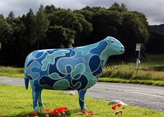 Flo (Cumberland Patriot) Tags: inn sheep head painted go kings cumbria trust flo calvert ewe thirlmere cumbrian herdwick thirlspot goherdwick